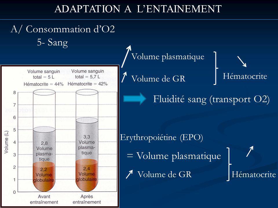 ADAPTATION A LENTAINEMENT A/ Consommation dO2 5- Sang Erythropoiétine (EPO) Volume plasmatique Volume de GR Hématocrite Fluidité sang (transport O2) Volume de GR = Volume plasmatique Hématocrite