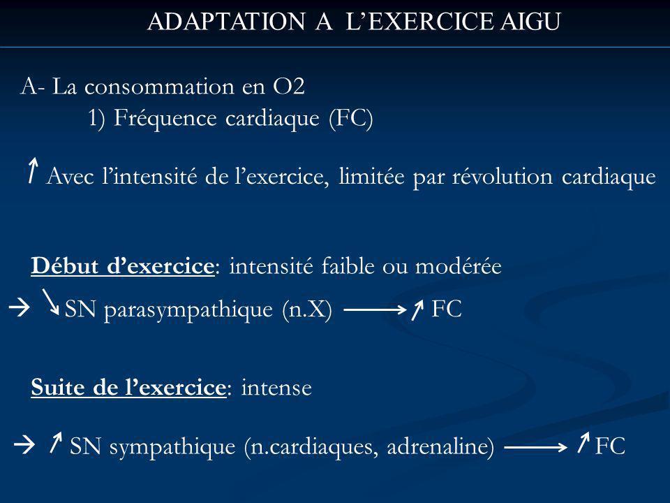 ADAPTATION A LEXERCICE AIGU A- La consommation en O2 1) Fréquence cardiaque (FC) Avec lintensité de lexercice, limitée par révolution cardiaque Début dexercice: intensité faible ou modérée SN parasympathique (n.X) FC Suite de lexercice: intense SN sympathique (n.cardiaques, adrenaline) FC