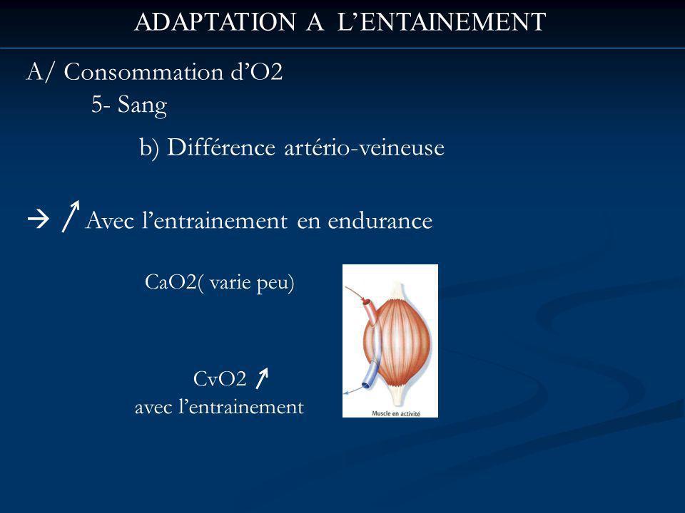 ADAPTATION A LENTAINEMENT Avec lentrainement en endurance CaO2( varie peu) CvO2 avec lentrainement A/ Consommation dO2 5- Sang b) Différence artério-veineuse