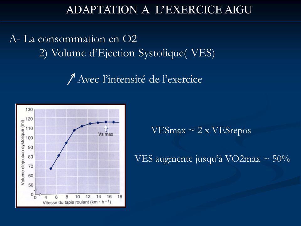 ADAPTATION A LEXERCICE AIGU A- La consommation en O2 2) Volume dEjection Systolique( VES) Avec lintensité de lexercice VESmax ~ 2 x VESrepos VES augmente jusquà VO2max ~ 50%