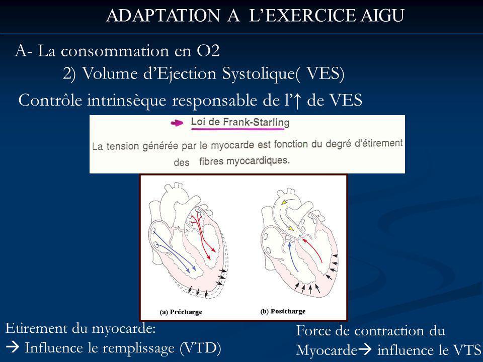 ADAPTATION A LEXERCICE AIGU A- La consommation en O2 2) Volume dEjection Systolique( VES) Contrôle intrinsèque responsable de l de VES Etirement du myocarde: Influence le remplissage (VTD) Force de contraction du Myocarde influence le VTS