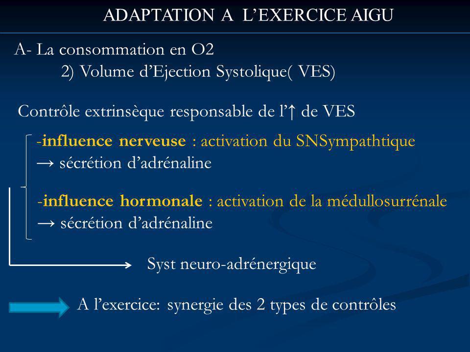 ADAPTATION A LEXERCICE AIGU A- La consommation en O2 2) Volume dEjection Systolique( VES) Contrôle extrinsèque responsable de l de VES -influence nerveuse : activation du SNSympathtique sécrétion dadrénaline -influence hormonale : activation de la médullosurrénale sécrétion dadrénaline Syst neuro-adrénergique A lexercice: synergie des 2 types de contrôles