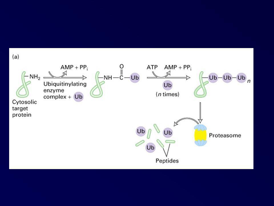 Glycosylation des protéines