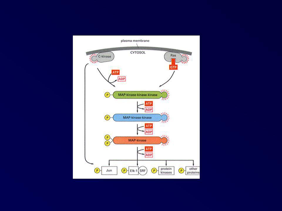 Structure de l ATP synthase