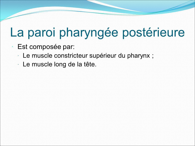 La paroi pharyngée postérieure Est composée par: Le muscle constricteur supérieur du pharynx ; Le muscle long de la tête.