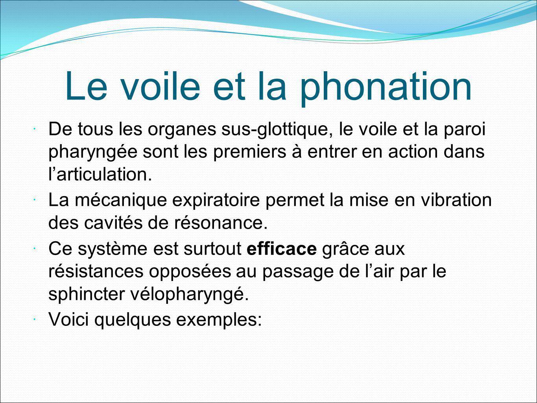 Le voile et la phonation De tous les organes sus-glottique, le voile et la paroi pharyngée sont les premiers à entrer en action dans larticulation. La