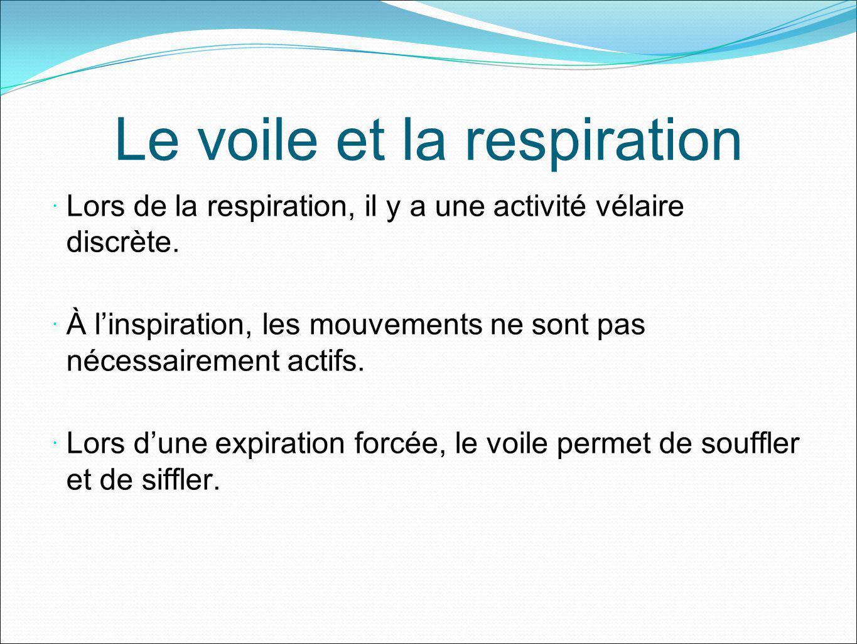 Le voile et la respiration Lors de la respiration, il y a une activité vélaire discrète. À linspiration, les mouvements ne sont pas nécessairement act