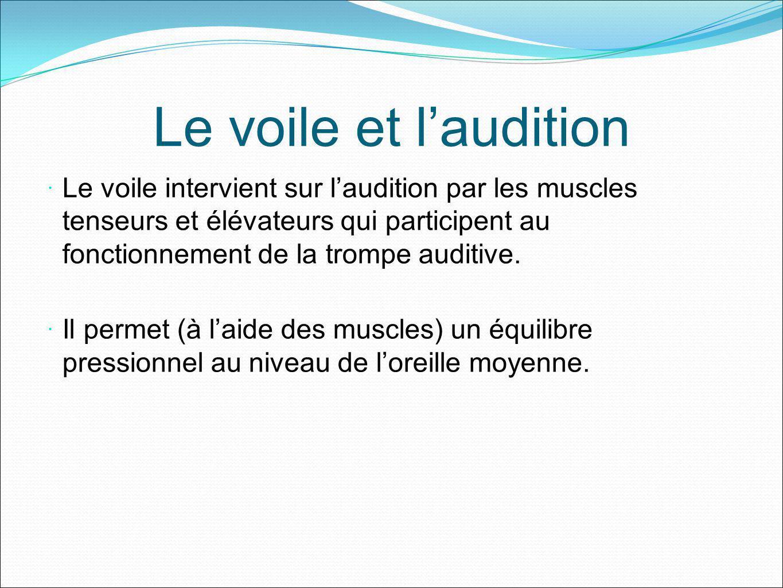 Le voile et laudition Le voile intervient sur laudition par les muscles tenseurs et élévateurs qui participent au fonctionnement de la trompe auditive