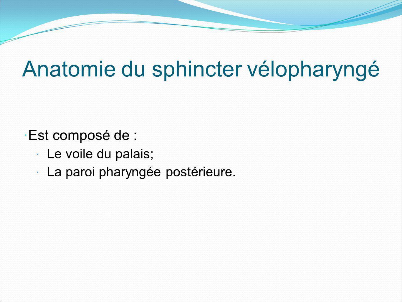 Anatomie du sphincter vélopharyngé Est composé de : Le voile du palais; La paroi pharyngée postérieure.