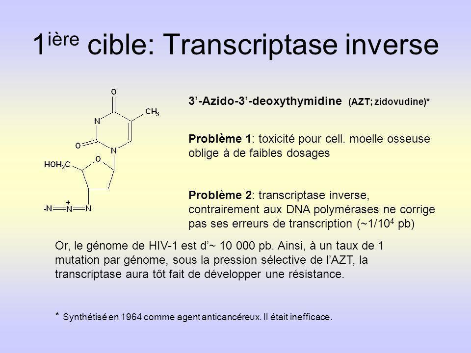 1 ière cible: Transcriptase inverse 3-Azido-3-deoxythymidine (AZT; zidovudine)* Problème 1: toxicité pour cell. moelle osseuse oblige à de faibles dos