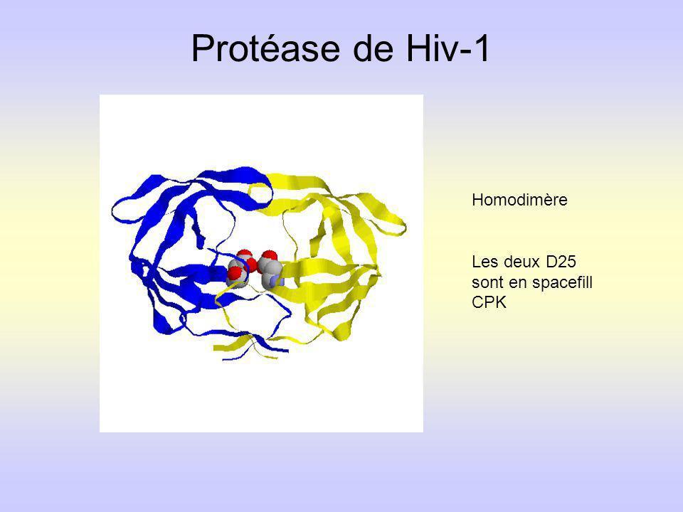 Protéase de Hiv-1 Homodimère Les deux D25 sont en spacefill CPK