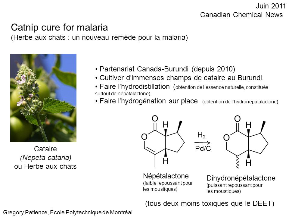 Catnip cure for malaria (Herbe aux chats : un nouveau remède pour la malaria) Juin 2011 Canadian Chemical News Gregory Patience, École Polytechnique d