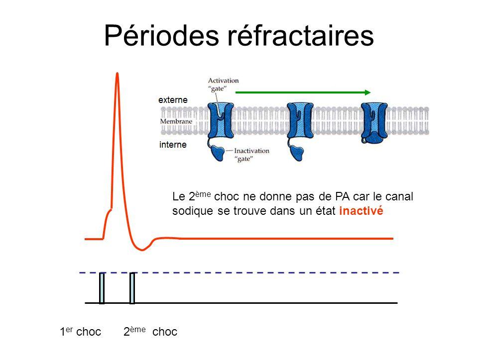 Périodes réfractaires 1 er choc2 ème choc Le 2 ème choc ne donne pas de PA car le canal sodique se trouve dans un état inactivé