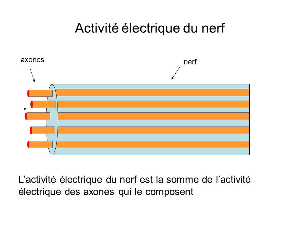 Activité électrique du nerf axones nerf Lactivité électrique du nerf est la somme de lactivité électrique des axones qui le composent