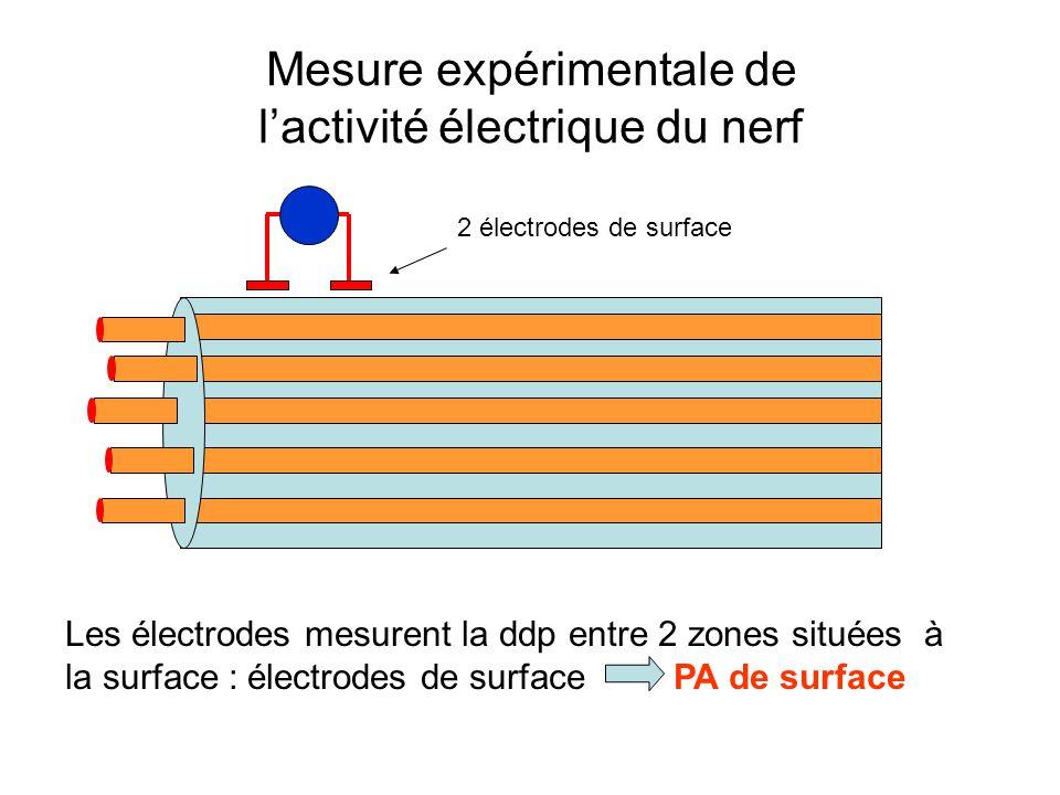 Mesure expérimentale de lactivité électrique du nerf 2 électrodes de surface Les électrodes mesurent la ddp entre 2 zones situées à la surface : élect