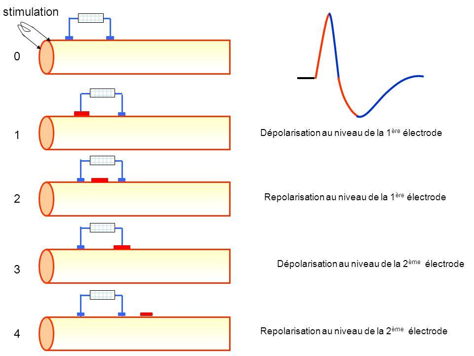 Dépolarisation au niveau de la 1 ère électrode Dépolarisation au niveau de la 2 ème électrode Repolarisation au niveau de la 2 ème électrode Repolaris