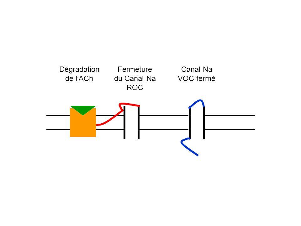 Dégradation de lACh Fermeture du Canal Na ROC Canal Na VOC fermé