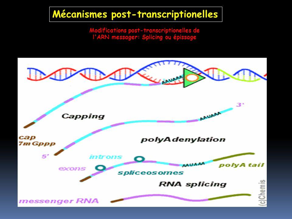 Modifications post-transcriptionelles de l'ARN messager: Splicing ou épissage Mécanismes post-transcriptionelles