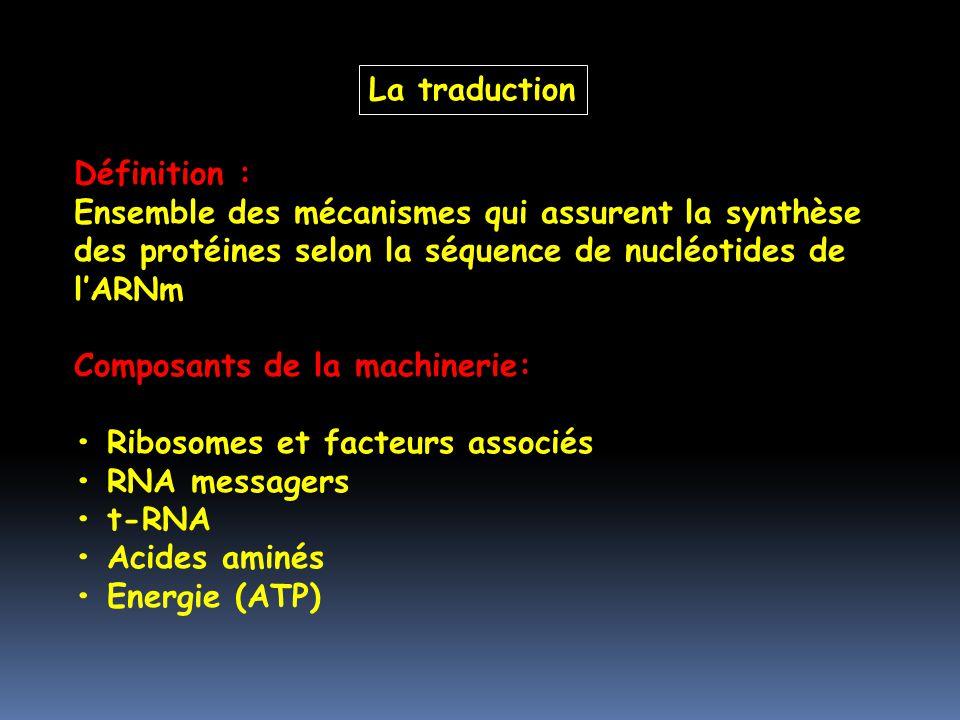 Définition : Ensemble des mécanismes qui assurent la synthèse des protéines selon la séquence de nucléotides de lARNm Composants de la machinerie: Rib