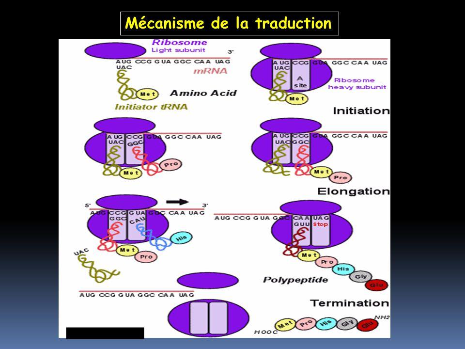 Mécanisme de la traduction