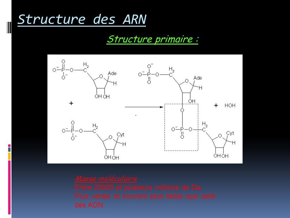 Structure primaire : Masse moléculaire Entre 25000 et plusieurs millions de Da. Plus variée et souvent plus faible que celle des ADN.