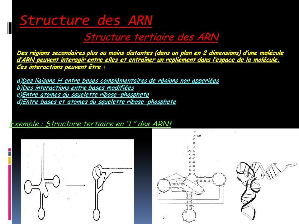 Structure des ARN Structure tertiaire des ARN Des régions secondaires plus ou moins distantes (dans un plan en 2 dimensions) dune molécule dARN peuven