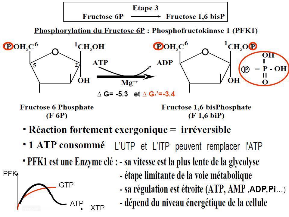 G= -5.3 et G ° =-3.4, ADP,Pi …) GTP ATP PFK XTP