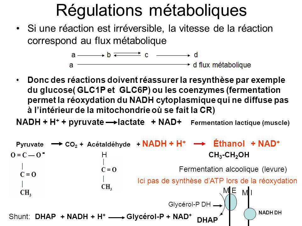 Régulations métaboliques Si une réaction est irréversible, la vitesse de la réaction correspond au flux métabolique Donc des réactions doivent réassur