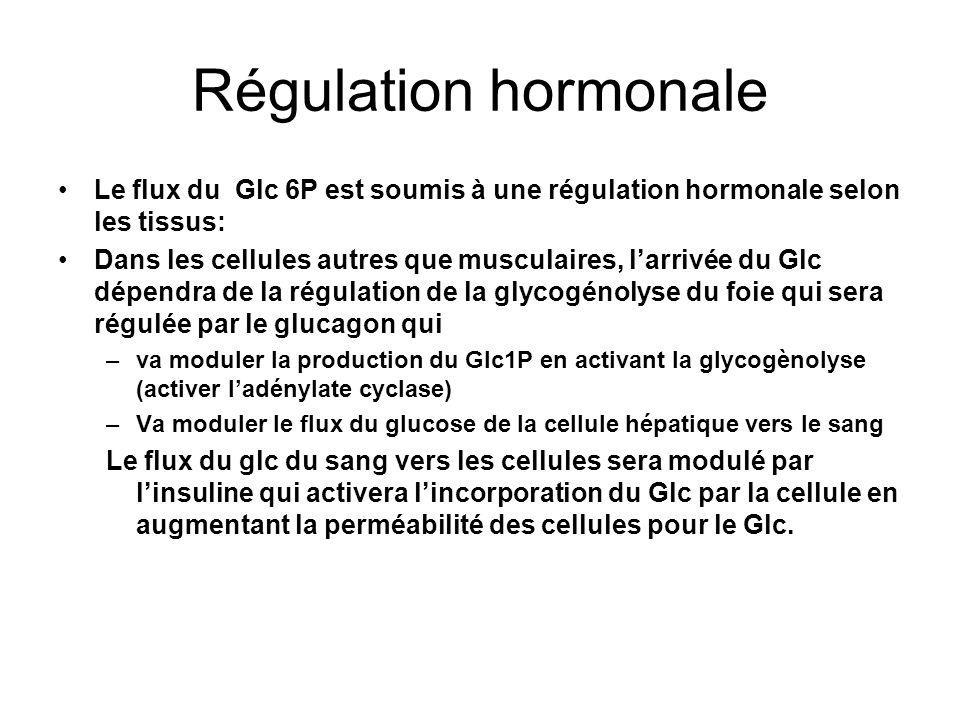 Régulation hormonale Le flux du Glc 6P est soumis à une régulation hormonale selon les tissus: Dans les cellules autres que musculaires, larrivée du G