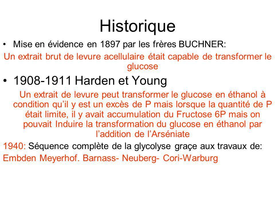 Historique Mise en évidence en 1897 par les frères BUCHNER: Un extrait brut de levure acellulaire était capable de transformer le glucose 1908-1911 Ha