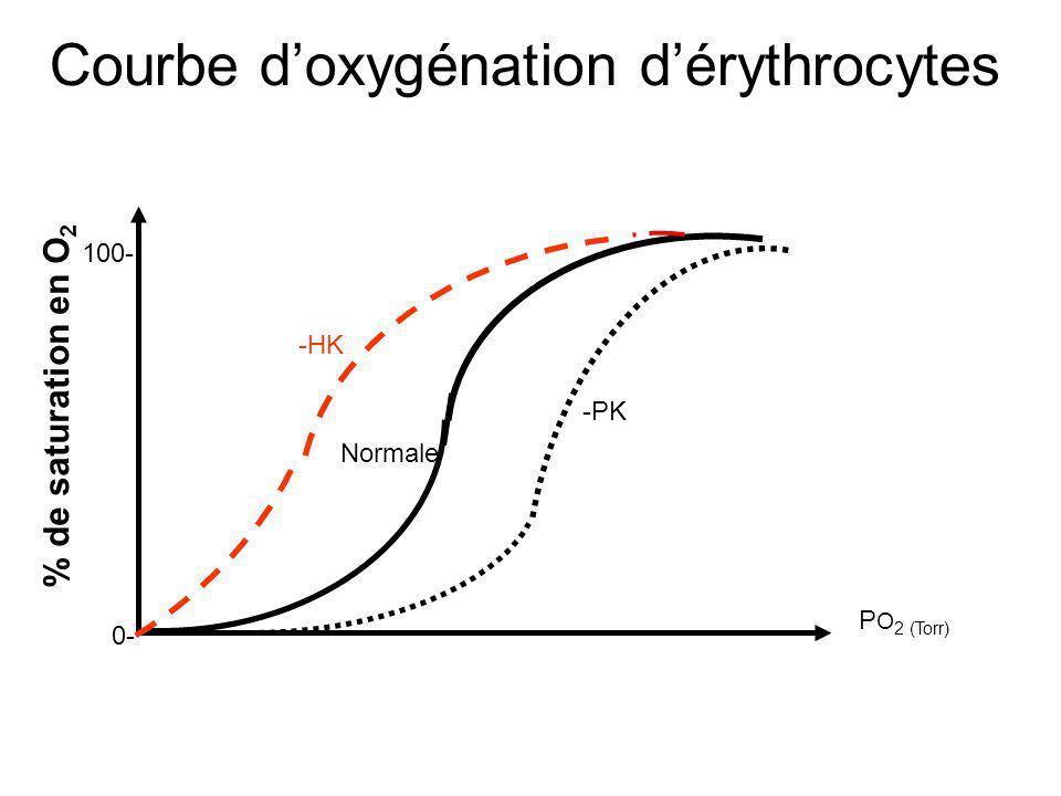 Régulation hormonale Le flux du Glc 6P est soumis à une régulation hormonale selon les tissus: Dans les cellules autres que musculaires, larrivée du Glc dépendra de la régulation de la glycogénolyse du foie qui sera régulée par le glucagon qui –va moduler la production du Glc1P en activant la glycogènolyse (activer ladénylate cyclase) –Va moduler le flux du glucose de la cellule hépatique vers le sang Le flux du glc du sang vers les cellules sera modulé par linsuline qui activera lincorporation du Glc par la cellule en augmentant la perméabilité des cellules pour le Glc.
