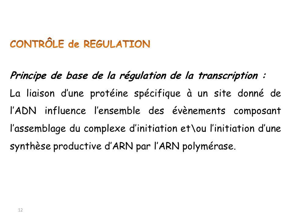 12 Principe de base de la régulation de la transcription : La liaison dune protéine spécifique à un site donné de lADN influence lensemble des évèneme