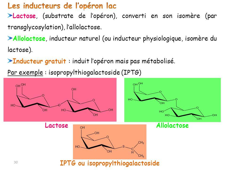 Lactose, (substrate de lopéron), converti en son isomère (par transglycosylation), lallolactose. Allolactose, inducteur naturel (ou inducteur physiolo