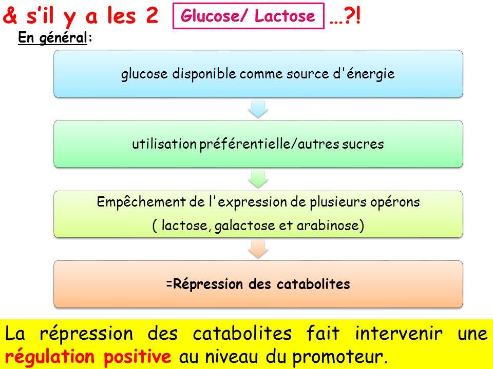 39 & sil y a les 2…?! En général: glucose disponible comme source d'énergieutilisation préférentielle/autres sucres Empêchement de l'expression de plu