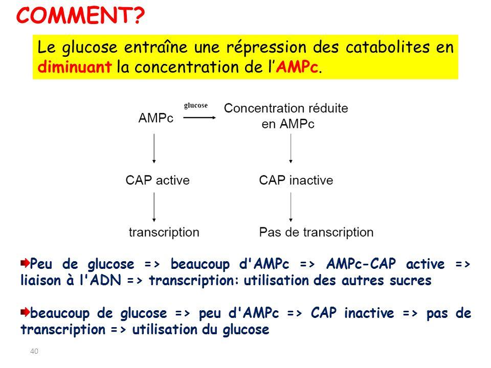 40 Le glucose entraîne une répression des catabolites en diminuant la concentration de lAMPc. COMMENT?