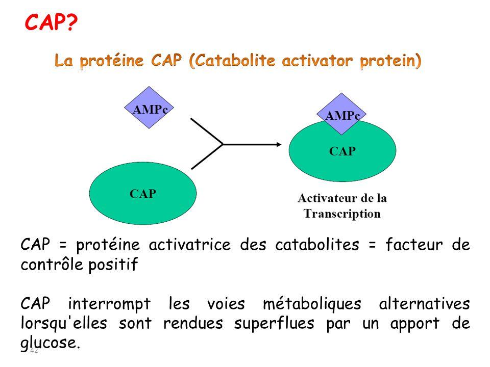 42 CAP = protéine activatrice des catabolites = facteur de contrôle positif CAP interrompt les voies métaboliques alternatives lorsqu'elles sont rendu