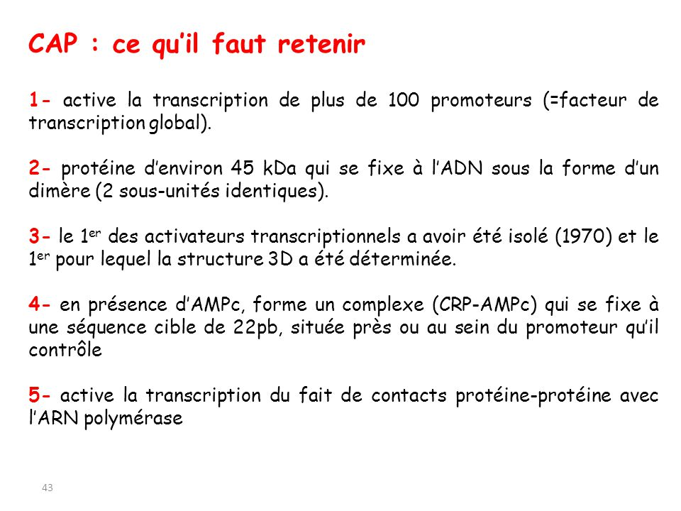 43 CAP : ce quil faut retenir 1- active la transcription de plus de 100 promoteurs (=facteur de transcription global). 2- protéine denviron 45 kDa qui