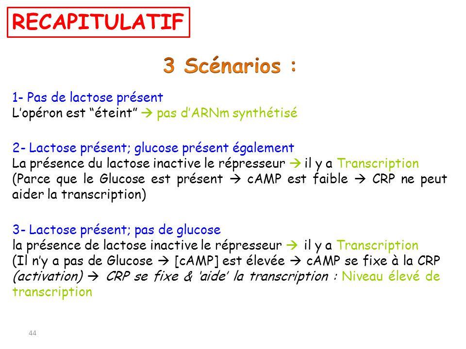 44 2- Lactose présent; glucose présent également La présence du lactose inactive le répresseur il y a Transcription (Parce que le Glucose est présent