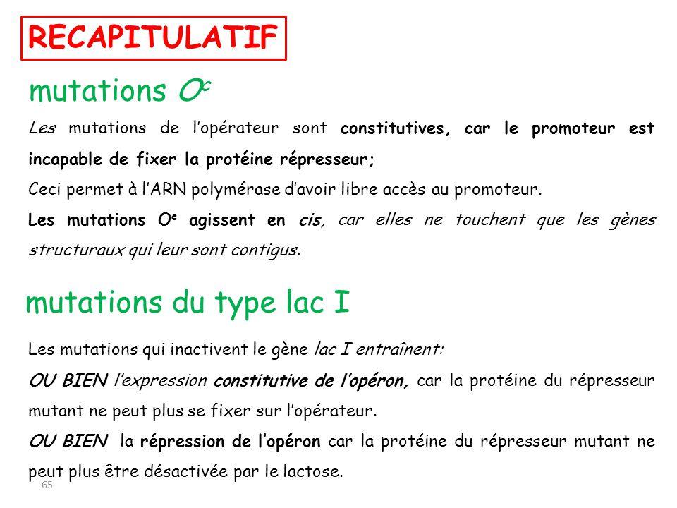 RECAPITULATIF mutations O c Les mutations de lopérateur sont constitutives, car le promoteur est incapable de fixer la protéine répresseur; Ceci perme