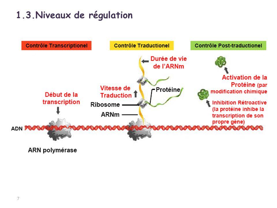 3 gènes structuraux: z, y & a codant pour les enzymes impliquées dans le métabolisme du lactose sont exprimés continuellement à faible taux sont induits environ 1000 fois quand le lactose est présent sont modulés par le taux de glucose du milieu 28