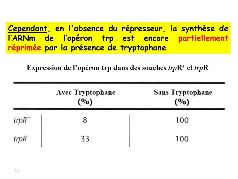 80 Cependant, en l'absence du répresseur, la synthèse de lARNm de lopéron trp est encore partiellement réprimée par la présence de tryptophane