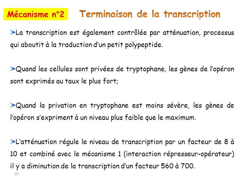 81 Mécanisme n°2 La transcription est également contrôlée par atténuation, processus qui aboutit à la traduction dun petit polypeptide. Quand les cell