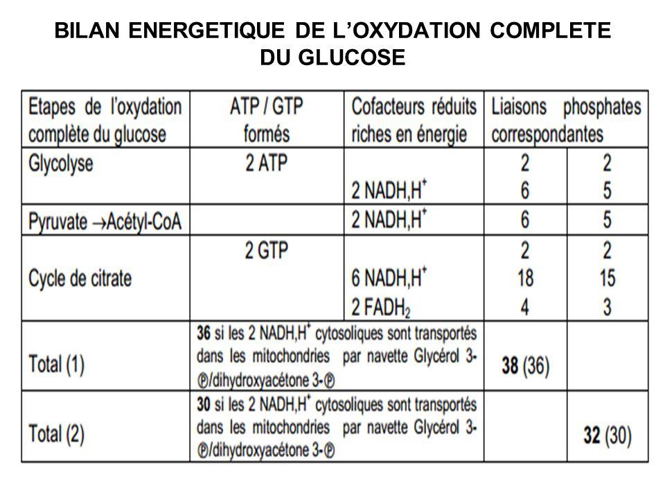 BILAN ENERGETIQUE DE LOXYDATION COMPLETE DU GLUCOSE