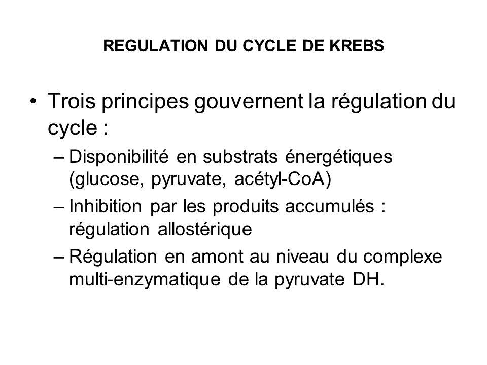 REGULATION DU CYCLE DE KREBS Trois principes gouvernent la régulation du cycle : –Disponibilité en substrats énergétiques (glucose, pyruvate, acétyl-C