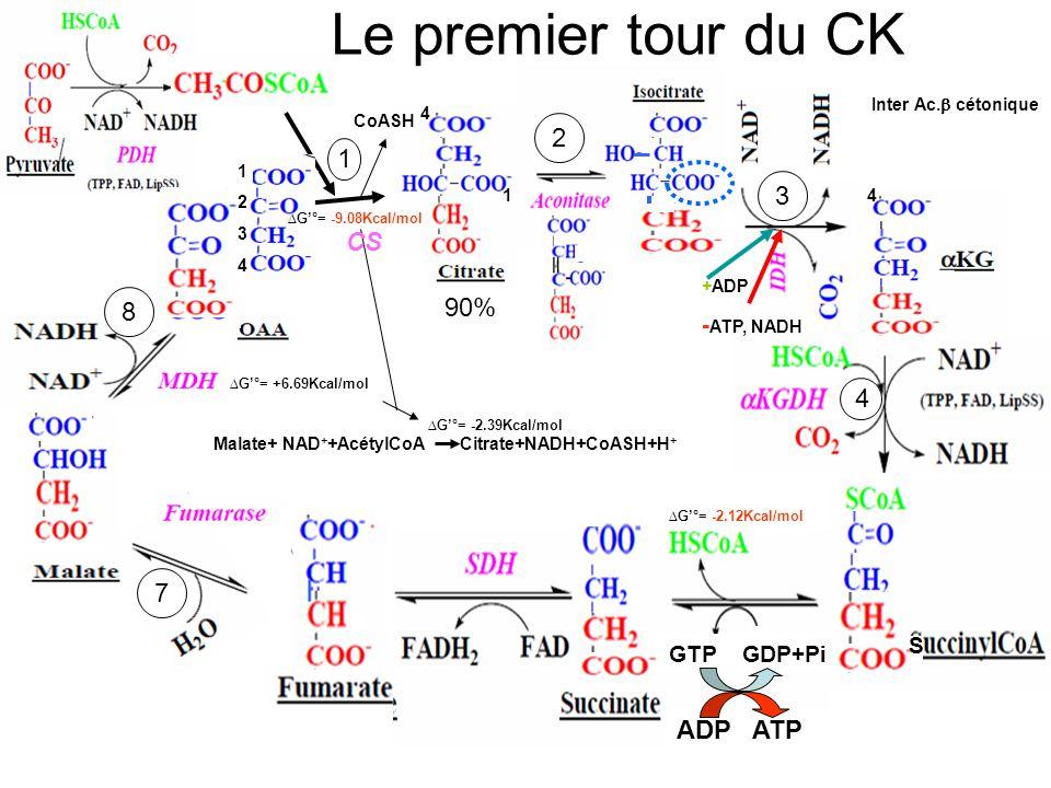 1 3 4 5 6 7 8 Le premier tour du CK 2 90% 12341234 4 1 +ADP - ATP, NADH G°= -9.08Kcal/mol 4 G°= +6.69Kcal/mol G°= -2.39Kcal/mol Malate+ NAD + +AcétylC