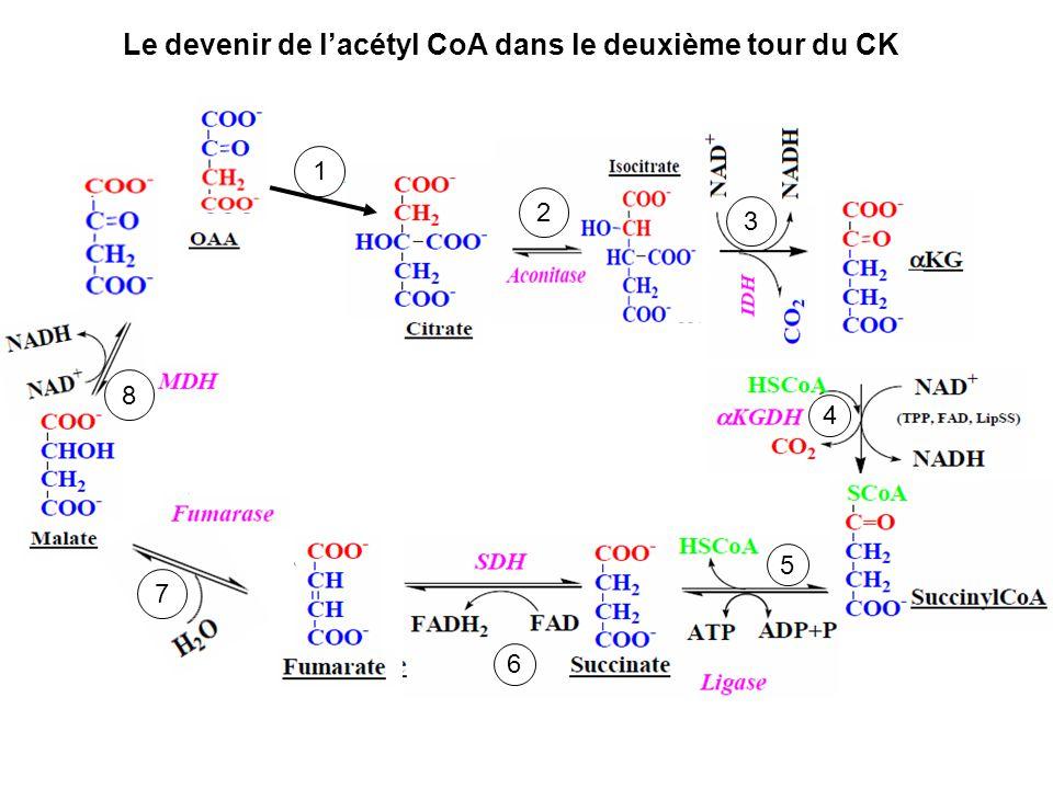 Le devenir de lacétyl CoA dans le deuxième tour du CK 1 2 3 4 5 6 7 8