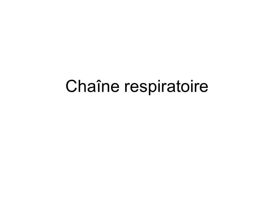 Chaîne respiratoire
