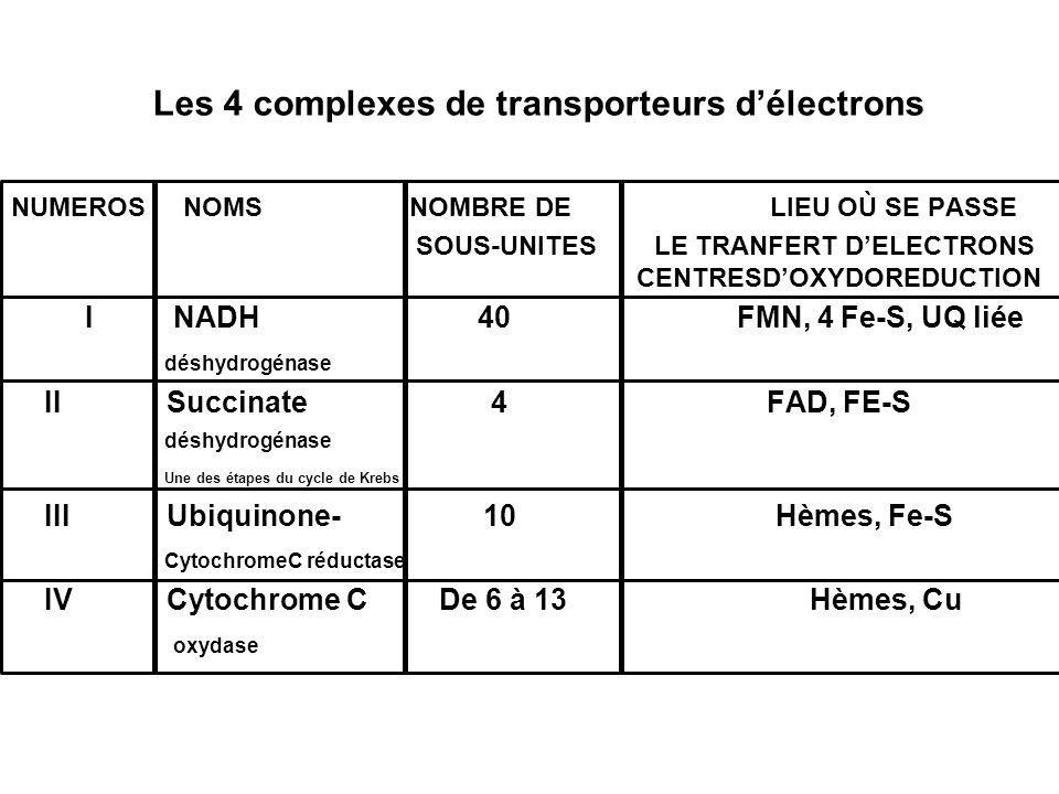 Les 4 complexes de transporteurs délectrons NUMEROS NOMS NOMBRE DE LIEU OÙ SE PASSE SOUS-UNITES LE TRANFERT DELECTRONS CENTRESDOXYDOREDUCTION I NADH 4
