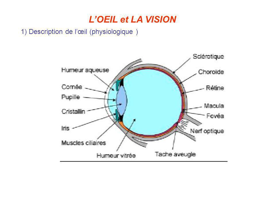 2) Propriétés générales de lœil œil = association de dioptres séparés par des milieux dindices différents (la cornée, lhumeur aqueuse, le cristallin, le corps vitré) Grace au cristallin, lœil peut changer sa distance focale f pour que limage dun objet se forme sur la rétine : on dit que lœil accommode.