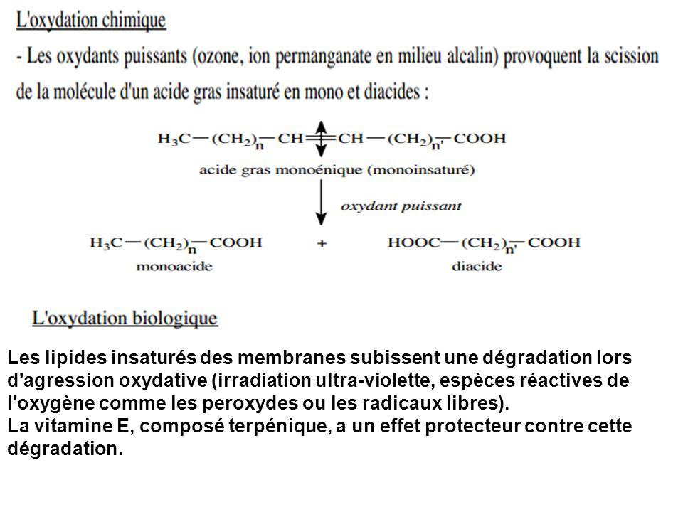 Les lipides insaturés des membranes subissent une dégradation lors d'agression oxydative (irradiation ultra-violette, espèces réactives de l'oxygène c